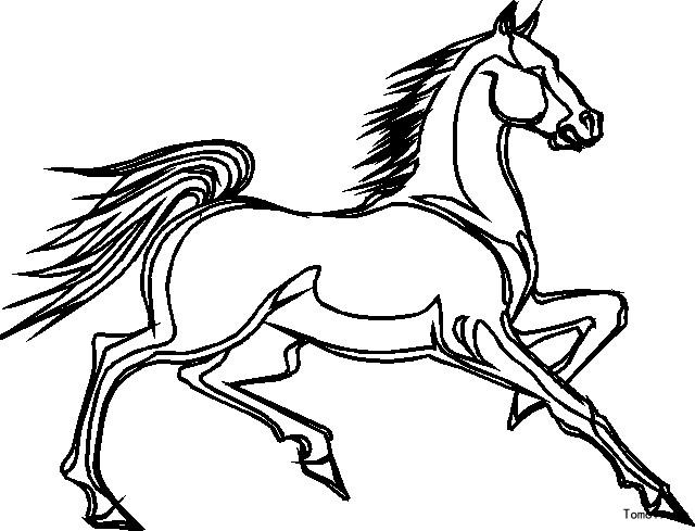 马儿童画图片简单 马的画法简笔画图片图片