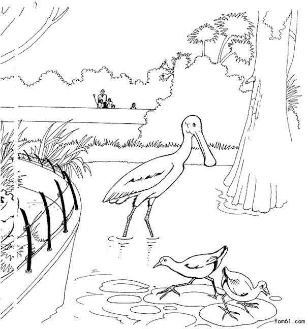 动物园简笔画