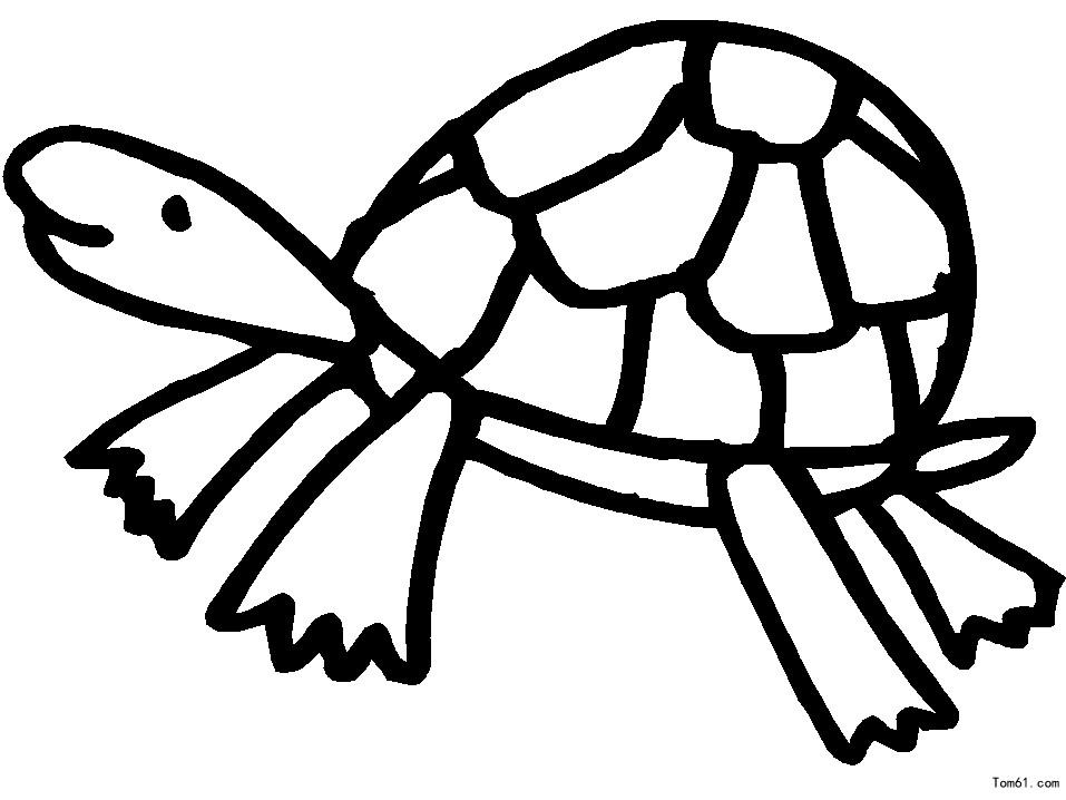 乌龟简笔画步骤 绘画步骤 1.