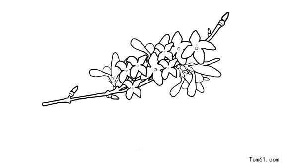 简笔画藤蔓边框图片:藤蔓花边边框简笔画:好看藤蔓简